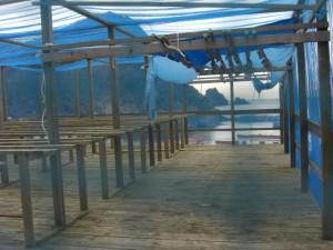 南伊豆町で一番安くて一番ウマイ天日干しあじ干物
