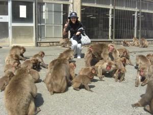 野猿300匹の楽園 『伊豆波勝崎苑』