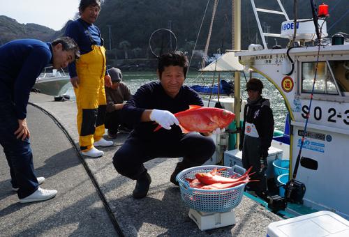 南伊豆ブランドの金目鯛は地金目鯛と呼ばれ脂が乗ってとてもおいしい魚です。