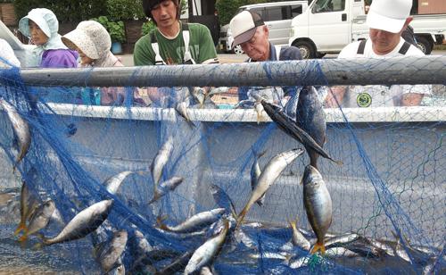 南伊豆には12の漁港があり毎日各地で地魚が水揚げされます。