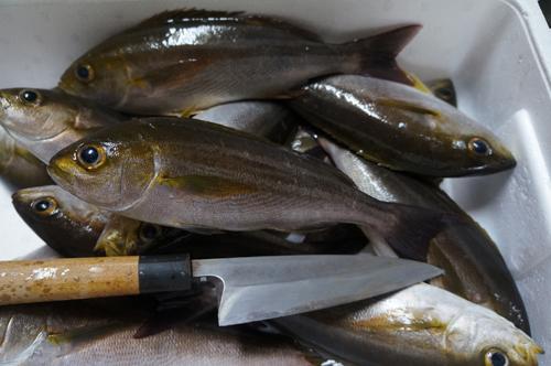 南伊豆漁港の朝獲れ地魚いさき