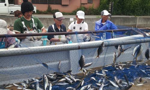 弓ヶ浜のタカベ漁、夏のタカベは脂が乗ってバーベキューに最高です。