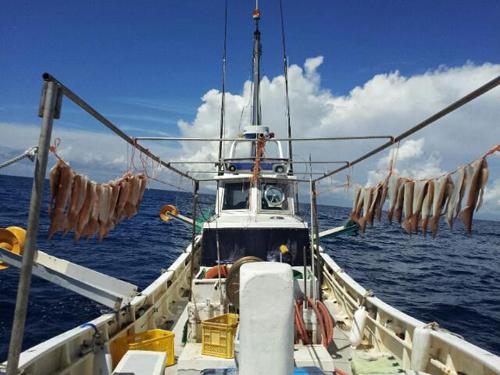 南伊豆漁港の朝獲れ地魚スルメイカ
