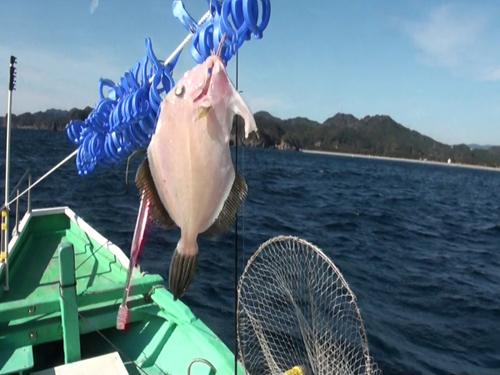 かわはぎ釣ってその場で船上干し。極上のかわはぎ干物がお土産になる。