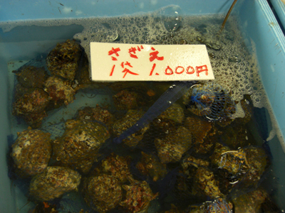 直売所ではサザエなどの魚介類や朝獲れ地魚が安く買える。