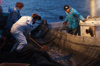 妻良漁港の定置網漁