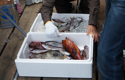コテージから車5分の伊豆漁協直売所で朝獲れ地魚を買う。
