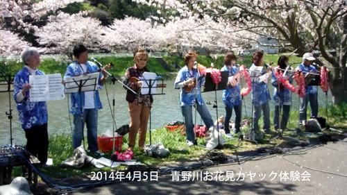 弓ヶ浜に流れ込む青野川でのお花見シーカヤック体験会でのウクレレ。