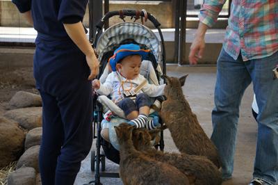 バンビにえさをあげる赤ちゃん