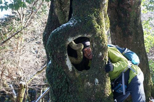 幻想的な 巨大ブナ林が続く