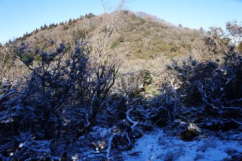 後藤山を仰ぎ見る