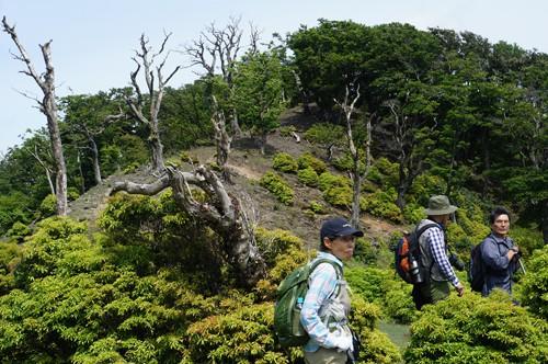 長沢頭の 巨大ブナ林の墓場