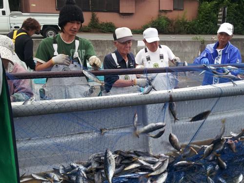 日本でも数少ないタカベ追い込み漁を専門に行う駿河丸