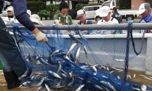 弓ヶ浜のタカベ漁