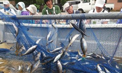 弓ヶ浜の夏のタカベ漁