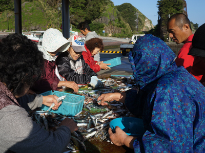 南伊豆の漁港では毎朝どこかで地魚が水揚げされている。