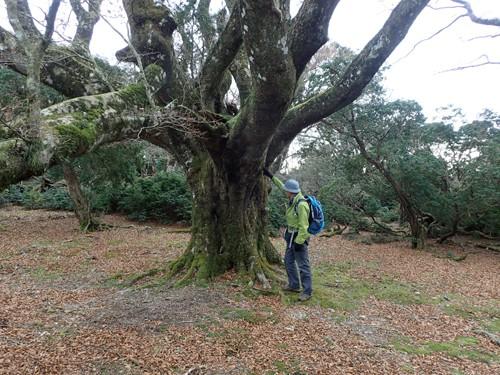 幻想的な横手ブナ周辺のブナ巨木群