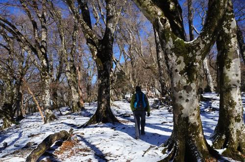 手引頭へ向かう稜線はブナ巨木が群生し、幻想的な世界